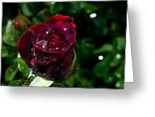 Sparkling Red Rose Greeting Card