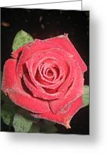 Sparkling Red Rose Greeting Card