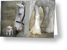 Sparky And Sterling Silvia Greeting Card