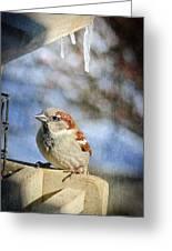 Sparrow 5   Greeting Card