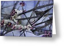 Sparrow And The Beauty Berry Greeting Card