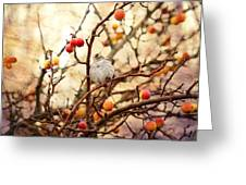 Sparrow In A Crab Apple Tree Greeting Card