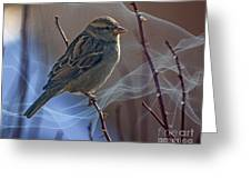 Sparrow In A Weave Greeting Card