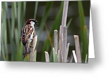Sparrow In Reeds Greeting Card