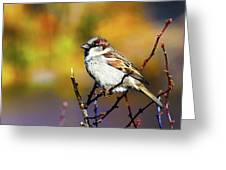 Sparrow In The Park Greeting Card