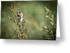 Sparrow In The Weeds Greeting Card