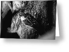 Sparrow On A Tree Greeting Card