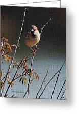 Sparrow On A Twig Greeting Card