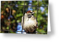 Sparrow On A Wire Fence Greeting Card