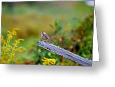 Sparrow On Board Greeting Card
