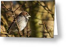 Sparrow Greeting Card by Rebecca Cozart