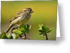 Sparrow Song 5 Greeting Card