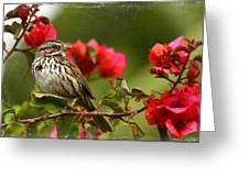 Sparrow Song 8 Greeting Card