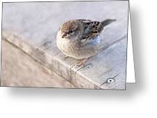 Sparrow - Takeoff Problems Greeting Card
