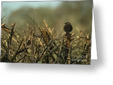 Sparrow Watch  Greeting Card