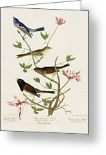 Sparrows And Bunting Greeting Card