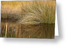 Spartina Grass  Greeting Card