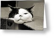 Special Delivery It's Pepper The Cat  Greeting Card