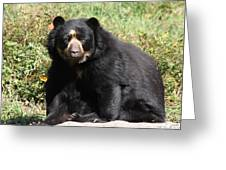 Speckled Bear Greeting Card