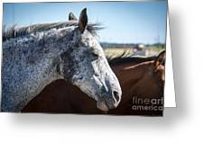 Speckled Gray Greeting Card