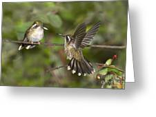 Speckled Hummingbirds Greeting Card