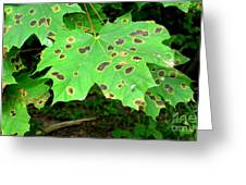 Speckled Leaves Greeting Card