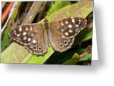 Speckled Wood Butterfly On A Leaf Greeting Card