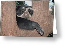 Spectacled Bear In Andean Foothills Peru Greeting Card