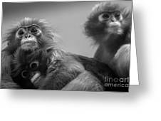 Spectacled Langur Family Greeting Card