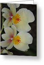 Speechless Beauty Greeting Card