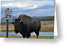Speedy Bison In Yellowstone National Park Greeting Card