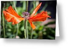 Spent Poppy Greeting Card