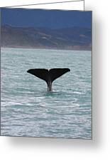 Sperm Whale Diving Greeting Card