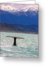 Sperm Whale Diving New Zealand Greeting Card