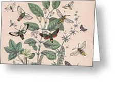 Sphingide - Thrididae - Seslidae Greeting Card