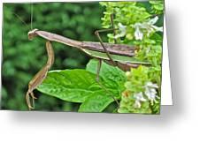 Spice Stalker Greeting Card