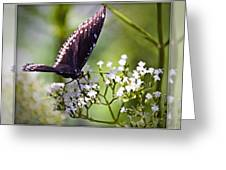 Spicebrush Swallowtail Butterfly Greeting Card
