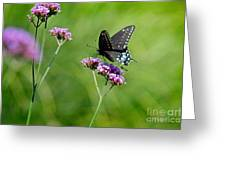 Spicebush Swallowtail Butterfly In Garden Greeting Card