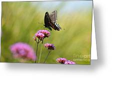 Spicebush Swallowtail Butterfly In Meadow Greeting Card