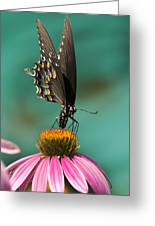 Spicebush Swallowtail Butterfly - Papilio Troilus Greeting Card