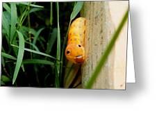 Spicebush Swallowtail Caterpillar Greeting Card