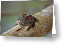 Spider Crab Greeting Card