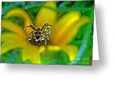 Spider Dew Flower Reflect Greeting Card