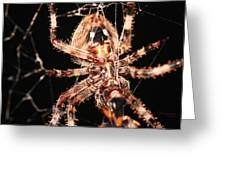 Spider - Hairy Greeting Card