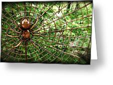 Spider In Its Web Greeting Card