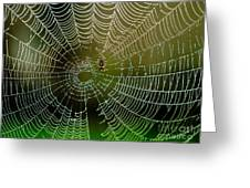 Spider In Web 3 Greeting Card