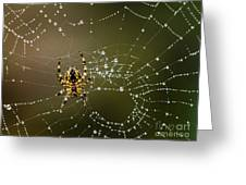 Spider In Web 5 Greeting Card