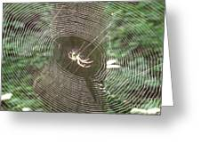 Spider Light Greeting Card
