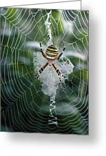 Spider On Its Web Greeting Card