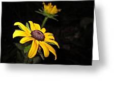 Spider On Rudbeckia Greeting Card